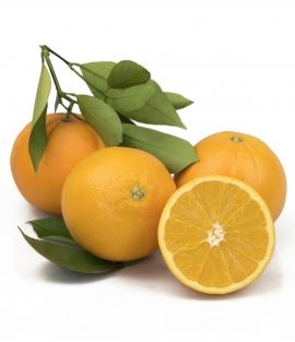 Orange Chislett Summer Navel