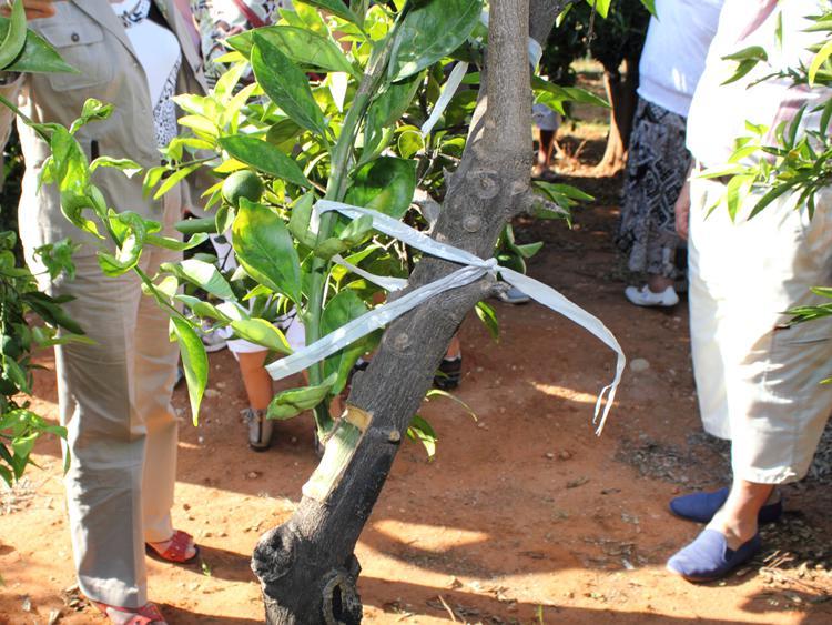 visita-guiada-museo-naranja-matafruit